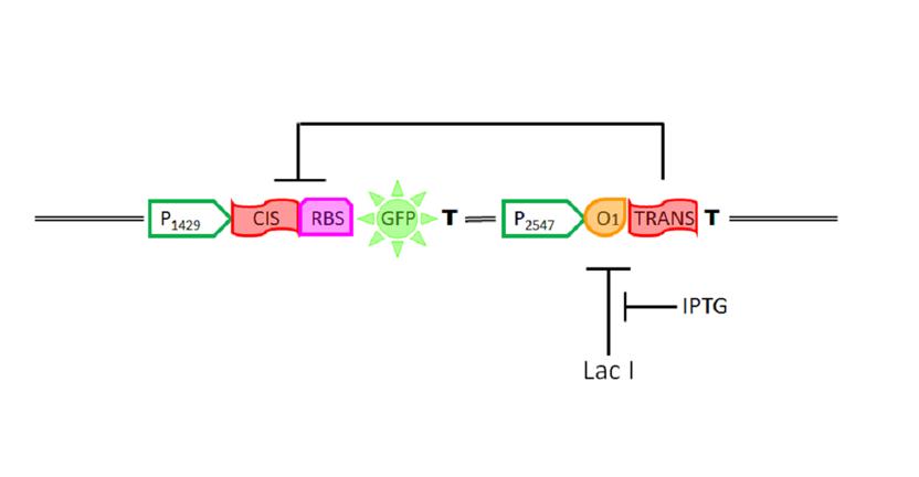 Gene circuit mc