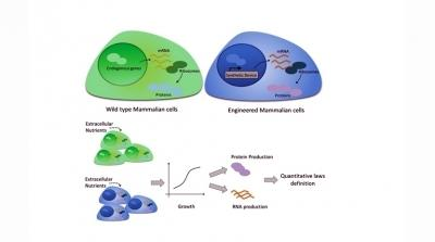 A 3D multiphase stem cell-based construct