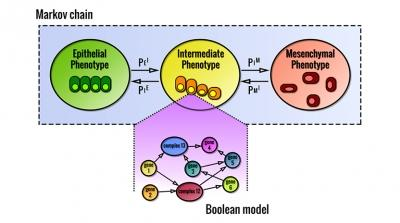 Computational model of cell phenotype decision making
